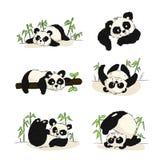 Set ilustracje z pandy lisiątkiem ilustracja wektor