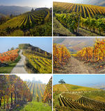 Set image panorama of autumn vineyards in Italy Stock Images