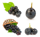 Set of images with a blue grapes Stock Image