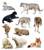 Set of images of carnivores. Isolated over white background with shade Royalty Free Stock Images