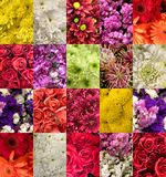 Set of images of different flowers Royalty Free Stock Photo
