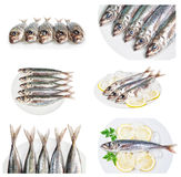 Set of images with dishes raw sea fish  mackerel. Stock Photos
