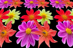 Set of images of flowers Royalty Free Stock Photos