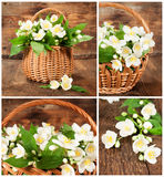 Set of images with jasmine in wicker basket Stock Photography