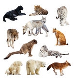 Set of images of predators. Isolated over white background with shade Royalty Free Stock Images