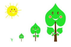 Set of images of trees from the germ to the big tree Royalty Free Stock Image