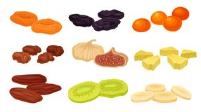 Set of images of various dried fruits. Vector illustration on white background. Set of images of various dried fruits. Prunes, figs, dried apricots, apricots vector illustration