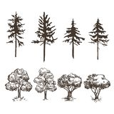 A set of images of various trees. Deciduous and coniferous. Sketches and silhouettes. A set of images of various trees. Spruce, pine, olive. Deciduous and royalty free illustration
