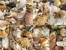 Set of images of different types of marine and oceanic shells Stock Images