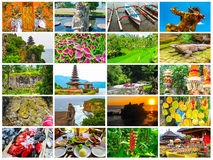 Set from images with views of Bali island Stock Photos