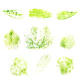 Set imprint of a green leaf isolated on white background Stock Images