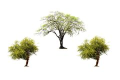 Set of Indian jujube tree and green tree isolated on white background. stock image