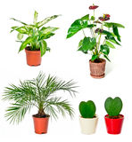 Set of indoor plants Stock Image