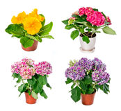 Set of indoor plants Stock Images