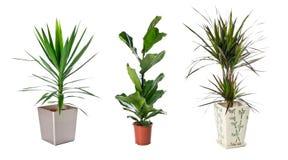 Set of indoor plants Stock Photography