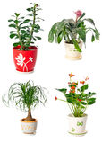 Set of indoor plants Royalty Free Stock Photo