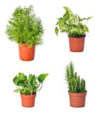 Set of indoor plants Stock Photography