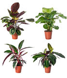 Set of indoor plants Royalty Free Stock Images