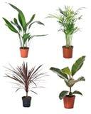 Set of indoor plants stock images