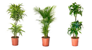 Set of indoor plants Stock Photos