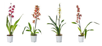 Set of indoor plants in flowerpots Stock Images