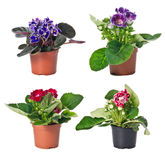 Set of indoor plants in flowerpots Stock Image