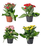Set of indoor plants in flowerpots Stock Photo