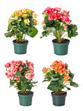 Set of indoor plants in flowerpots Royalty Free Stock Photos