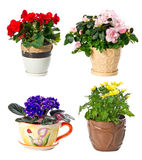 Set of indoor plants in flowerpots Stock Photography