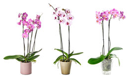 Set of indoor plants in flowerpots Royalty Free Stock Photography