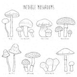Set of inedible mushrooms with titles on white background. Hand drawn vector illustration collection. Set of inedible mushrooms with titles on white background Stock Photo