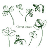 Set of ink drawing clover leaves Stock Photography
