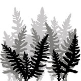 Set of ink drawing fern leaves Stock Photography