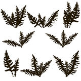Set of ink drawing fern leaves. Fern leaves silhouettes, vintage style botanical illustration,  monochrome drawing floral background, hand drawn vector Royalty Free Stock Photos