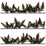 Set of ink drawing fern leaves. Fern leaves silhouettes, vintage style botanical illustration,  monochrome drawing floral background, hand drawn vector Stock Photography