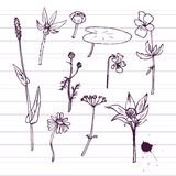Set of ink drawing herbs Stock Images