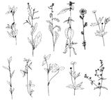 Set of ink drawing herbs and flowers