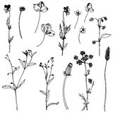 Set of ink drawing herbs and leaves Stock Photography