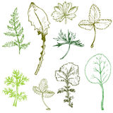 Set of ink drawing leaves Stock Images