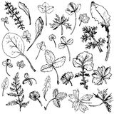 Set of ink drawing leaves Royalty Free Stock Photos
