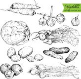Set of  ink drawing vegetables Stock Photos