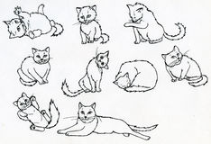 Set of ink drawn cats Royalty Free Stock Image