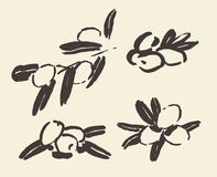 Set ink hand drawn olive tree branches vector Royalty Free Stock Images