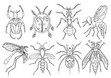Set of ink illustration of insects Stock Photo
