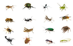 Set insects royalty free stock photo
