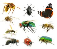 Set of insects Royalty Free Stock Image