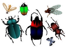 Set of insects Stock Images