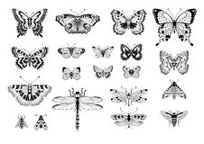 Set of insects vector illustration