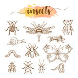 Set of insects doodle sketch Royalty Free Stock Images