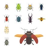 Set of insects flat style vector design icons. Collection nature beetle and zoology cartoon illustration. Set of insects flat style vector design icons Royalty Free Stock Photo